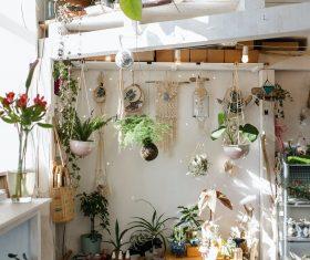 6 biljaka koje mogu preživjeti u svakom okruženju