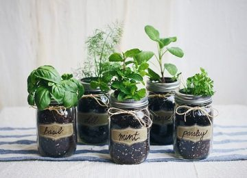 DIY-Mason-Jar-Fresh-Herb-Garden