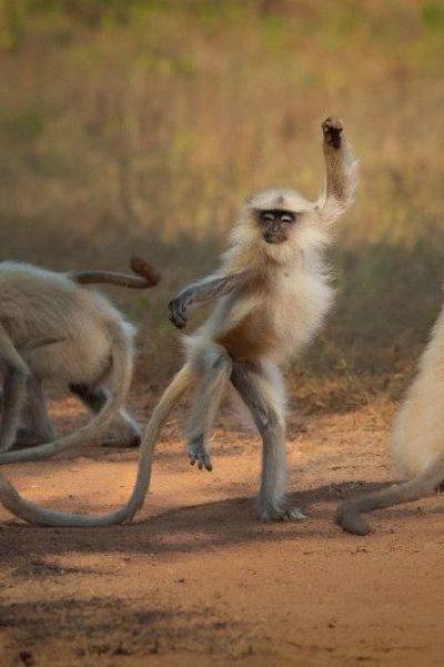 Sarosh-Lodhi_Dancing-Away-to-Glory_00005652-800x534