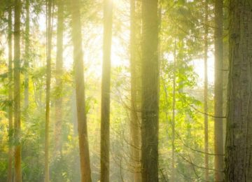 bright-daylight-environment-forest-240040 (1)