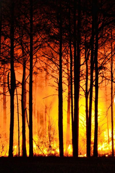 forest-fire-465617_1920