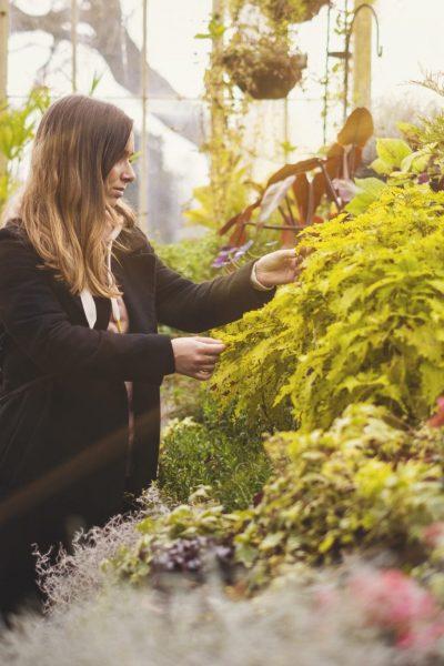 Jeste li znali da u Botaničkom vrtu možete kupiti biljku