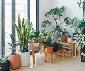 potted-green-indoor-plants-3076899