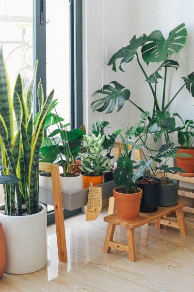 potted-green-indoor-plants-3076899